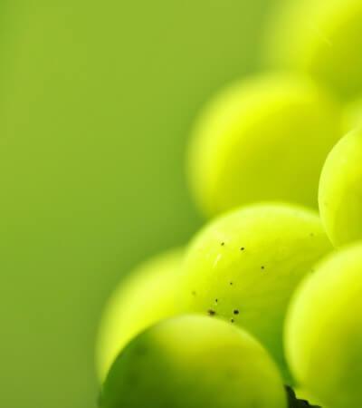 Grüne Smoothies: ATP und Zutaten